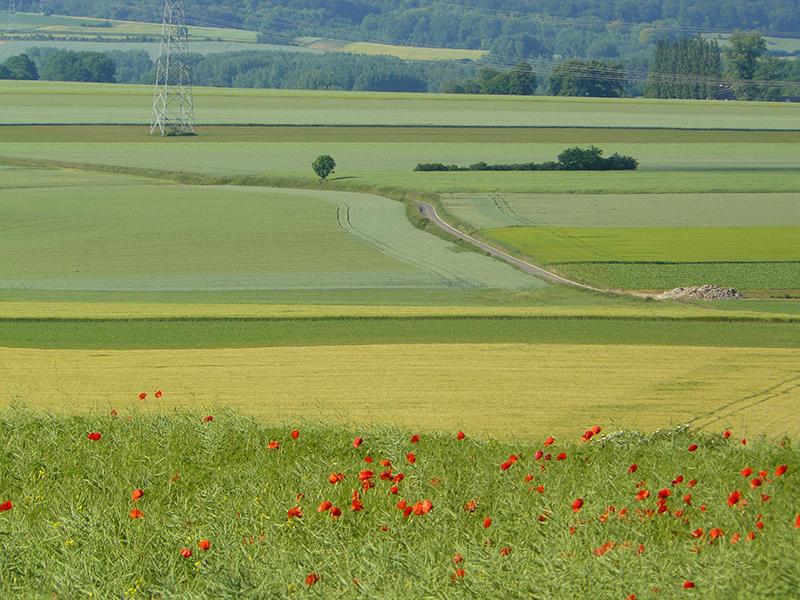 Bernavillois-paysage